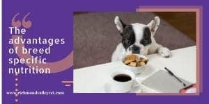 small dog looking at food placed on table