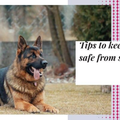Tips to keep your dog safe from snake bite