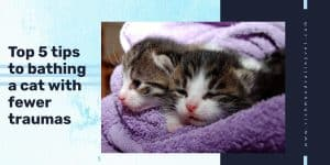 Two kitten wrapped in towel after bath