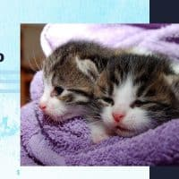 Two kittens wrapped in towel after bath