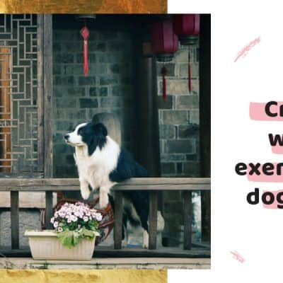 Creative ways to exercise your dog indoor