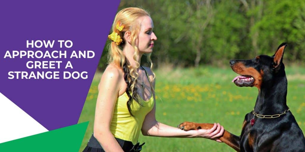girl shaking hands with a dobermann
