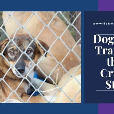 shot coated tan dog inside a cage