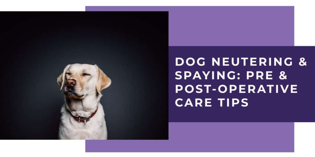 dog neutering & spaying - pre and post operative care tips