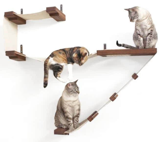 Cat playing on wall mounted furniture 1