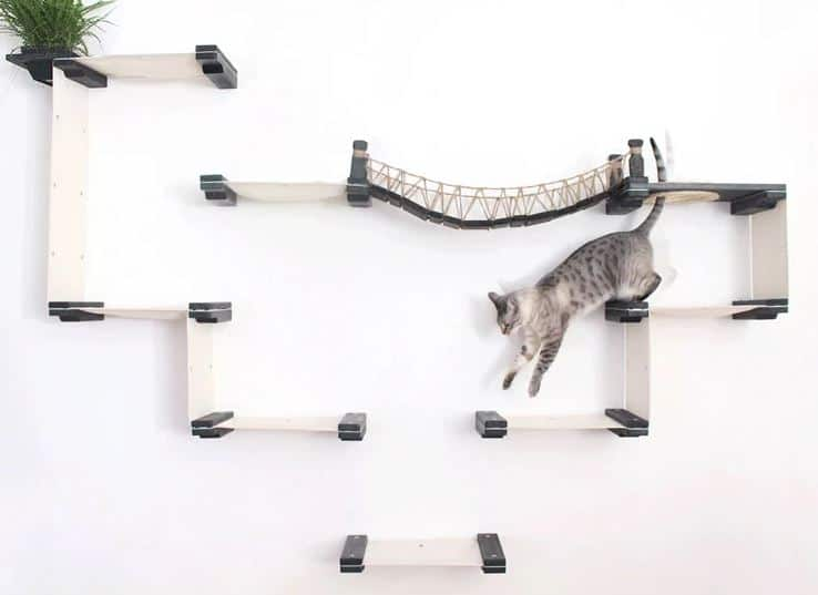 Cat playing on wall mounted modular system