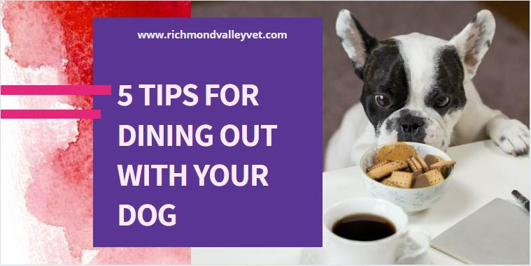 Dog looking at food kept at dining table